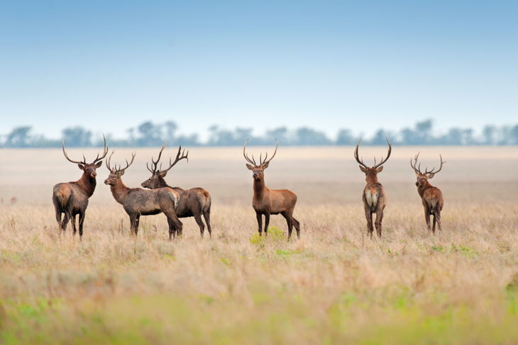 Best Deer Hunting States