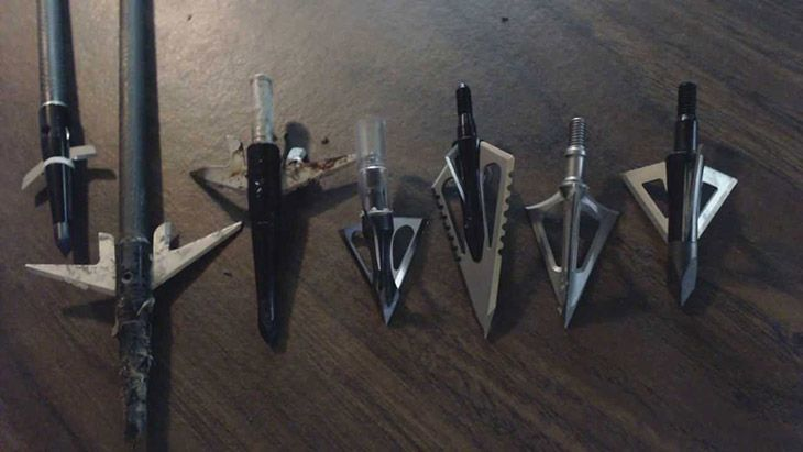 Choosing the Best Broadhead for Elk