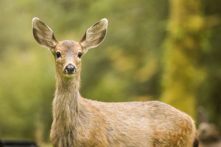 What sound does a deer make four sounds you need to learn for What do you need to build a house