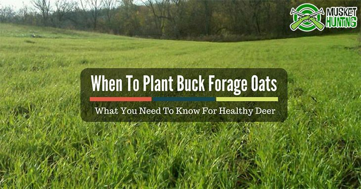 When To Plant Buck Forage Oats