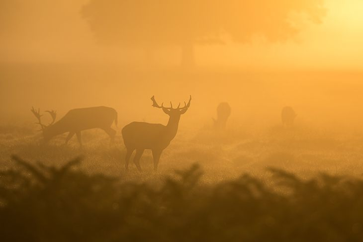 deer hunting at dawn