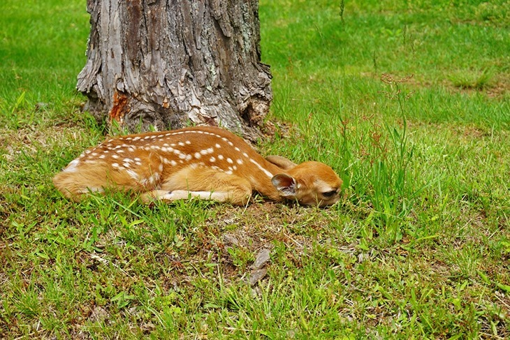 Deer sleeping on the grass