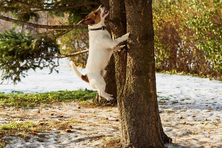 Dog jumping on tree chasing squirrel