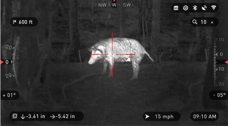 Hog Hunting At Night