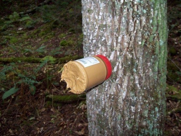 place the peanut butter jar on a tree