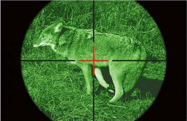 Choosing the Right Night Vision Scope