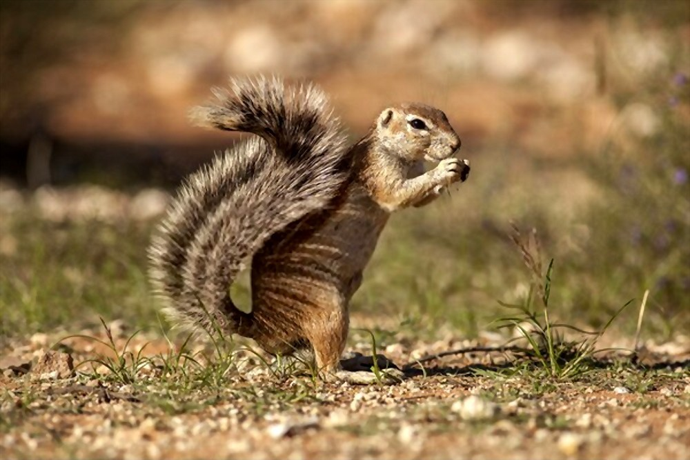 how to preserve a squirrel tail