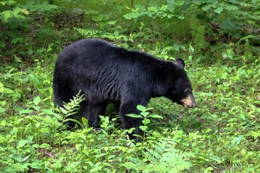 can i shoot a bear on my property in virginia