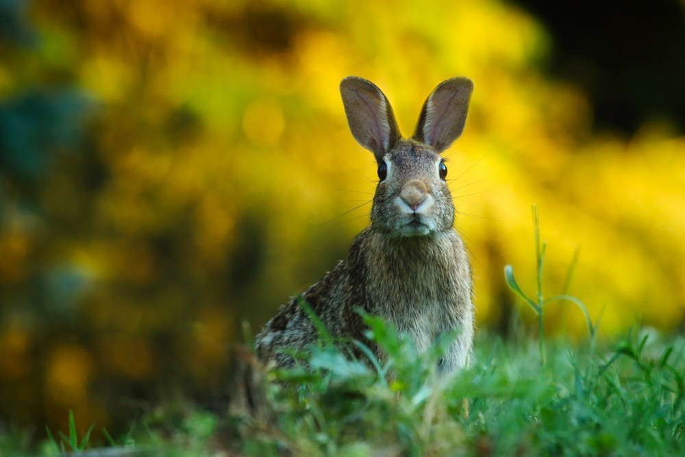 rabbit hunting tips for beginners