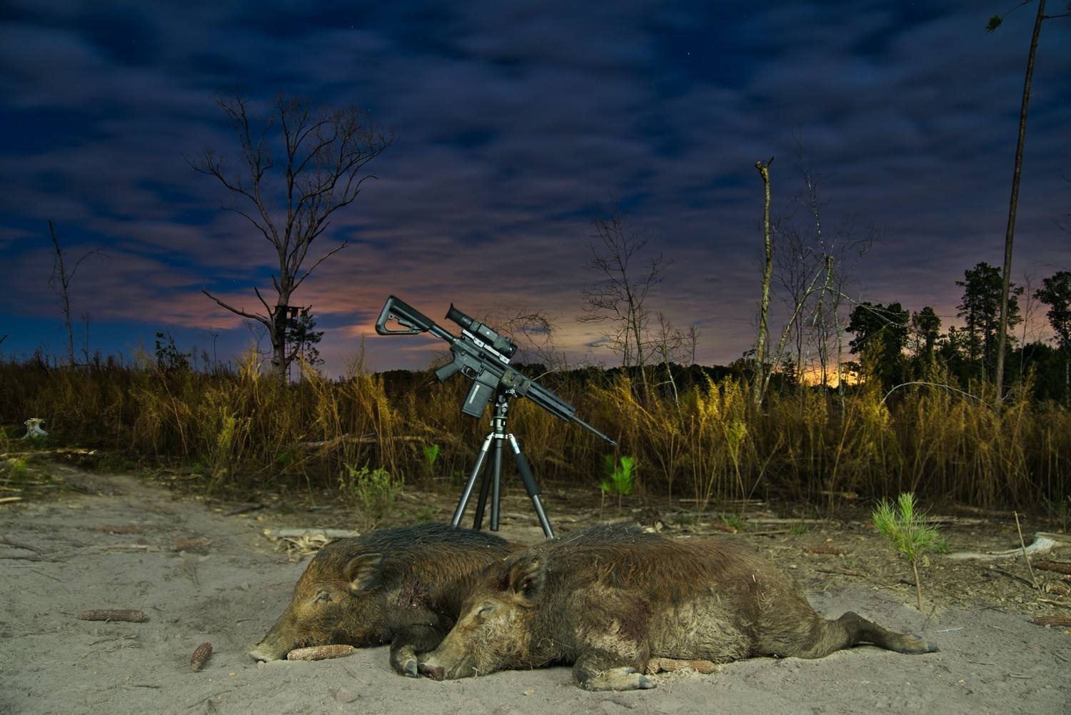 Making The Most Of Loosening Night Hunt Rules