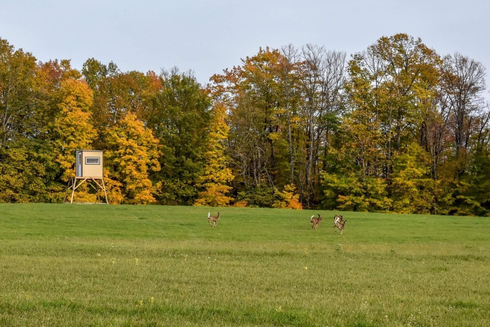 5 Tips for Getting the Whitetail of your Dreams