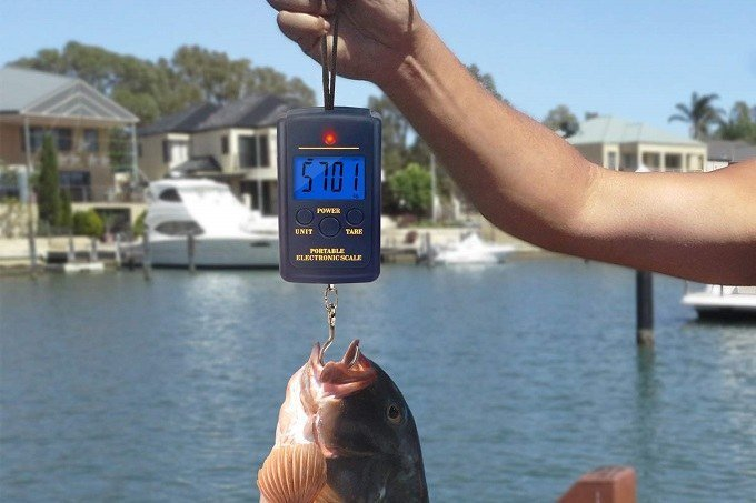 How to Weigh a Fish with a Digital Scale