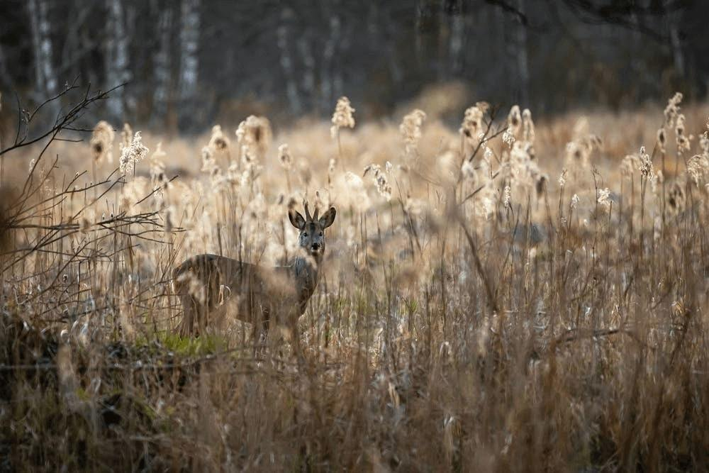5 Things You Should Consider When Purchasing Hunting Land