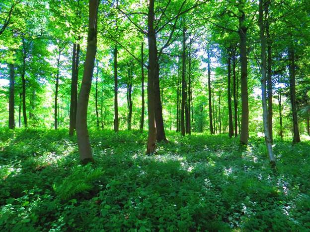 Tips to Purchasing Vacant Land for Recreation or Hunting