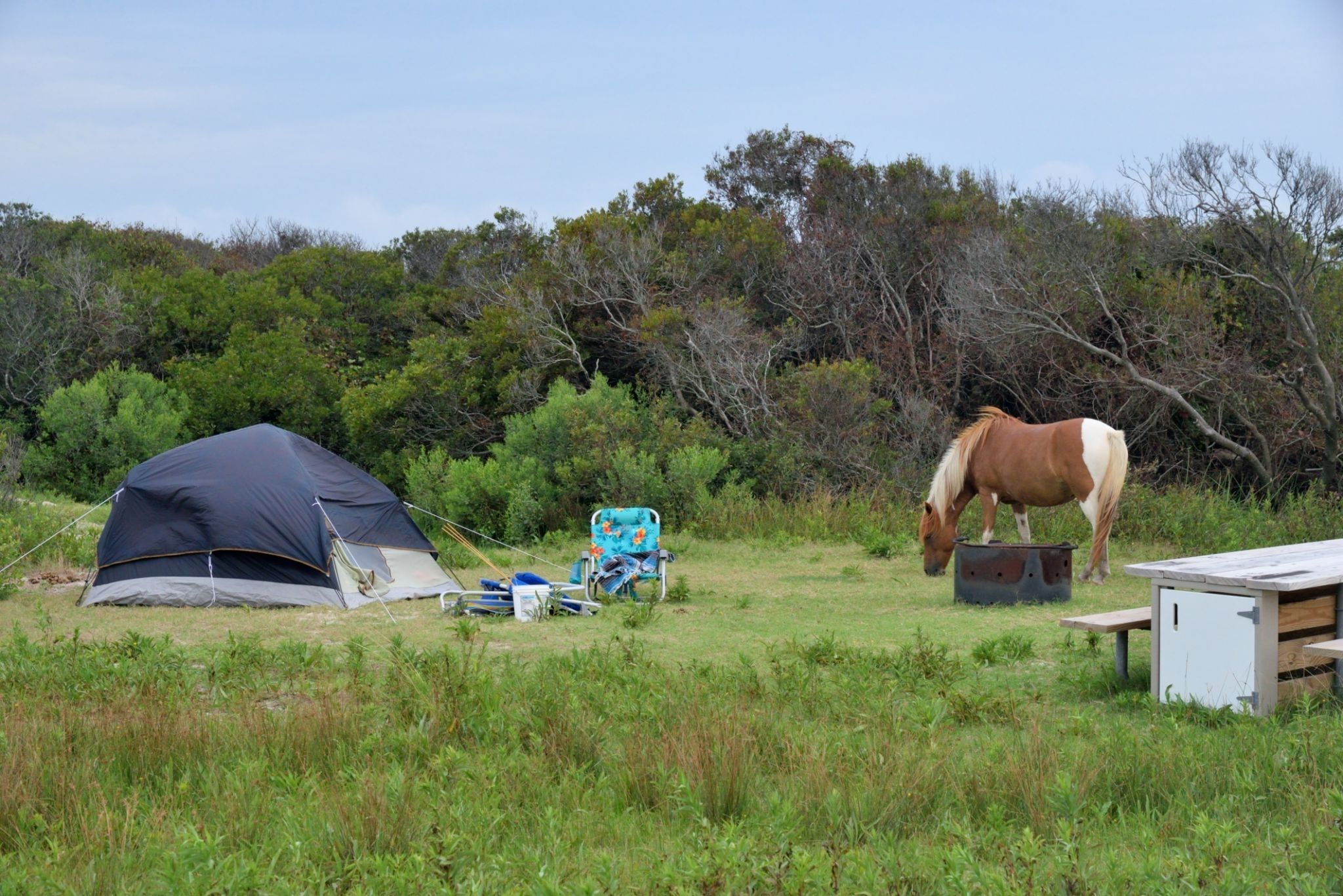5 Tips on How to Camp with Your Horse