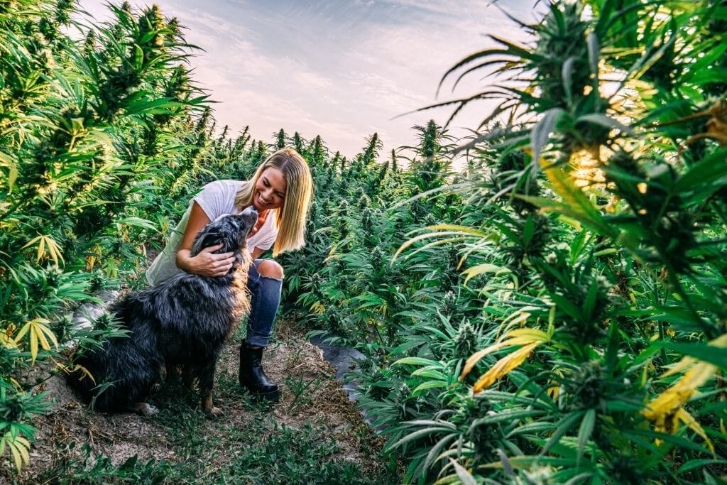 CBD Oil Treatment For Dogs with Pain, Inflammation, and Anxiety